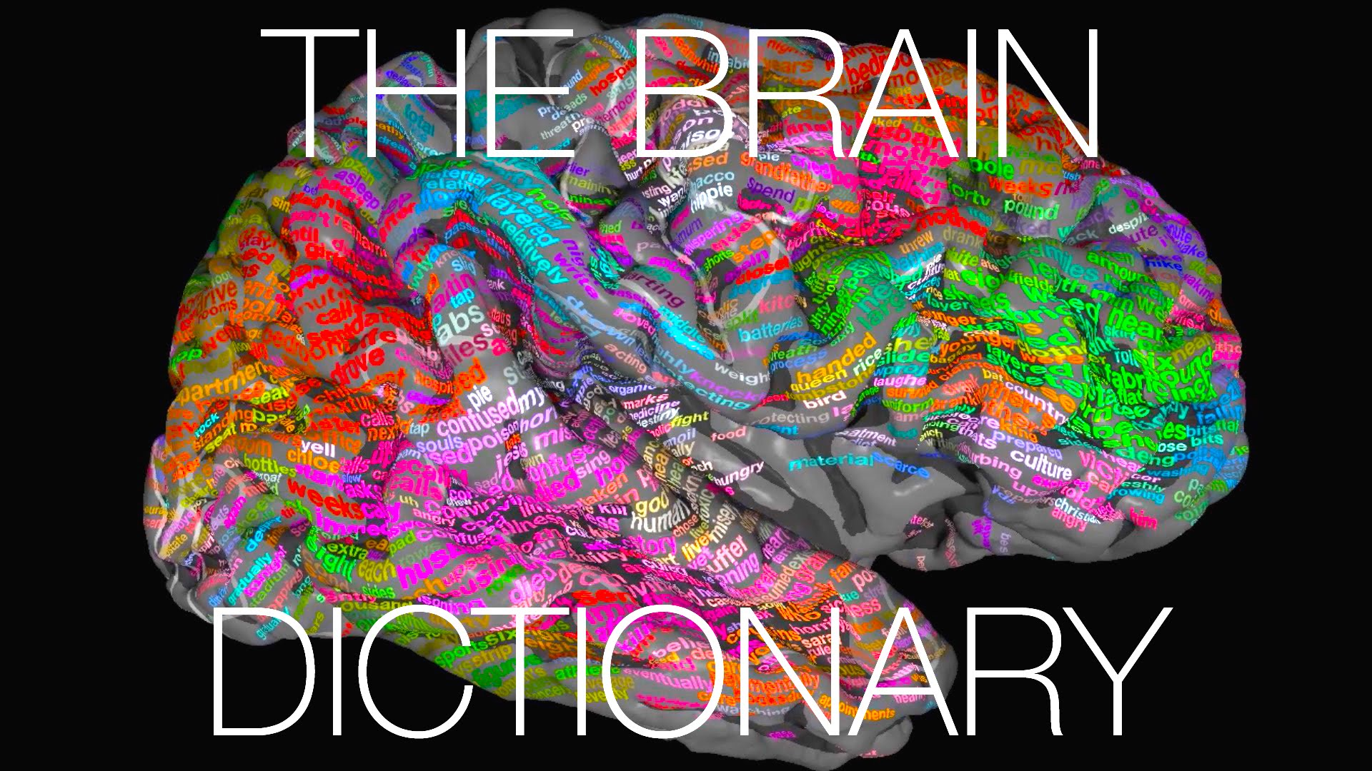 A new atlas of brain shows the where we store our words2