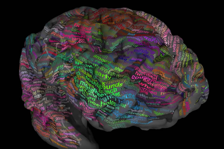 A new atlas of brain shows the where we store our words